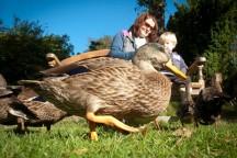 Marwood Ducks